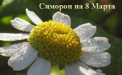 симорон на 8 марта