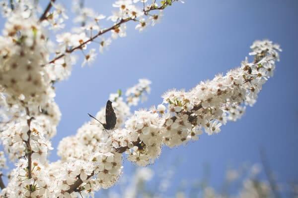 бабочка на яблоне
